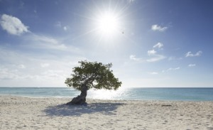 Aruba_Why Aruba_Fofoti_Beach_1